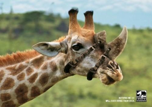 A2-giraffe_1