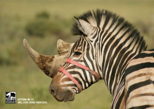 A2-zebra_1