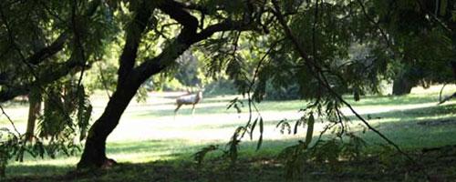 Rietfontein Nature Reserve. Photo via City of Joburg.