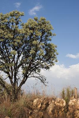 rietfontein_ridge